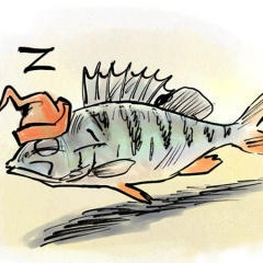 Ánh sáng đô thị có thể khiến cá thiếu ngủ