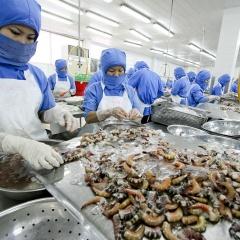 Doanh nghiệp thuỷ sản giảm 50-90% lợi nhuận vì đại dịch Covid-19