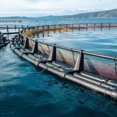Trung Quốc chuyển hướng kế hoạch phát triển thủy sản
