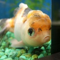 Khi loài cá cũng trầm cảm vì ... cô đơn