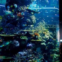 Nhìn sang cường quốc cá cảnh Singapore