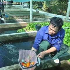 TP.HCM: Diện tích nuôi cá cảnh công nghệ cao chiếm gần 60%