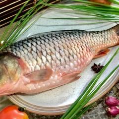 Thuốc từ các loài cá