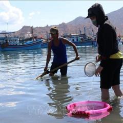 Được mùa cá dìa giống, ngư dân thu tiền triệu chỉ trong vài giờ đứng vớt