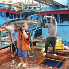 Xuất khẩu thủy sản khó hồi phục mạnh trong năm