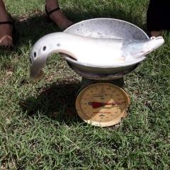 Mô hình nuôi cá thát lát thu lãi hơn 110 triệu đồng/0,7 ha