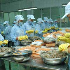 Tôm xuất khẩu sang Mỹ và Trung Quốc tăng trưởng bất chấp dịch bệnh