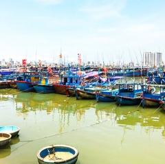Chống khai thác thủy sản bất hợp pháp: Còn nhiều khó khăn