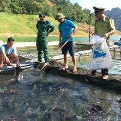 Tuyên Quang: Cả huyện khấm khá nhờ nuôi cá đặc sản
