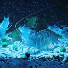 Sử dụng đúng cách men vi sinh khi nuôi thủy sản