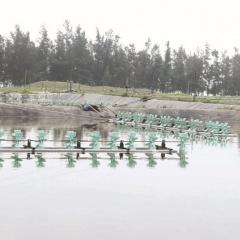 Miền Trung nan giải thị trường giống thủy sản