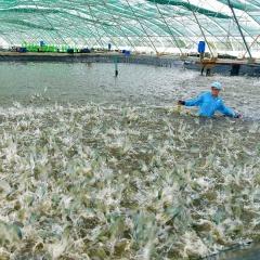Sức đề kháng mạnh mẽ của ngành thủy sản