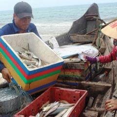 """Nghề """"lói"""" hồi sinh - Sống lại biểu tượng đánh cá gần bờ"""