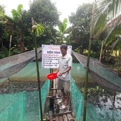 Vĩnh Long: Nhân rộng mô hình nuôi ếch kết hợp với cá diêu hồng