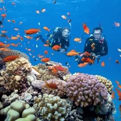 Giữ gìn rạn san hô ở bán đảo Sơn Trà