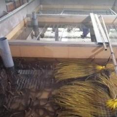 Vĩnh Long: Phát triển vùng nuôi lươn thâm canh đảm bảo an toàn thực phẩm