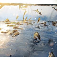 Ecuador và Trung Quốc ký thỏa thuận về an toàn sinh học trong nuôi tôm
