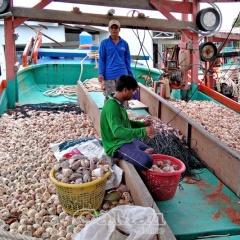 Khi ngư dân bảo vệ nguồn lợi thuỷ sản
