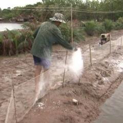 Tôm chết hàng loạt trong mùa mưa, nông dân phòng bệnh thế nào?