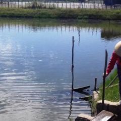 Thừa Thiên - Huế: Xuất hiện tảo độc gây hại nuôi trồng thủy sản
