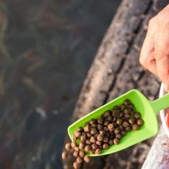 Tầm quan trọng của nucleotide trong thức ăn cho thủy sản