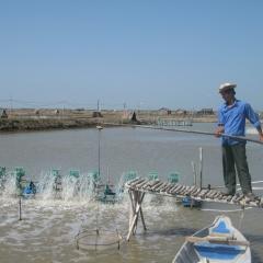 Đà Nẵng: Đào ao nuôi 2 con tôm thẻ và cua biển, cả làng cùng đổi đời