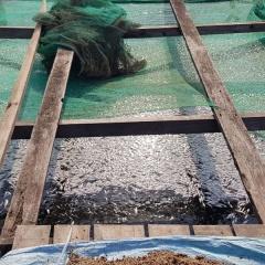 Rà soát, xử lý vi phạm nuôi thủy sản lồng, bè trên sông