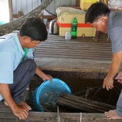 Loài cá khó nuôi mà bù lại giá cao chót vót
