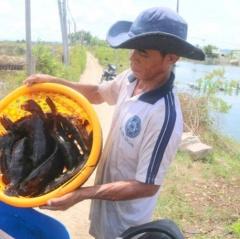 Cá mú bị bỏ đói vì... không bán được!