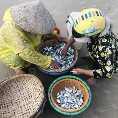 Ngư dân trúng mùa cá trích