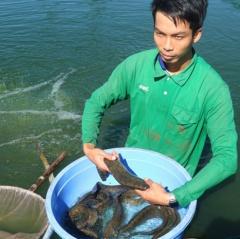 9X thu lãi tiền tỉ từ nghề nuôi cá chạch lấu