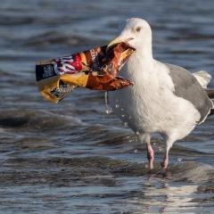 Công nghệ hiện tại có thể giảm 80% rác thải nhựa đại dương mỗi năm