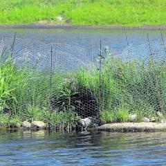 Làm đảo nổi thực vật để loại bỏ nitơ và photpho trong nước nuôi