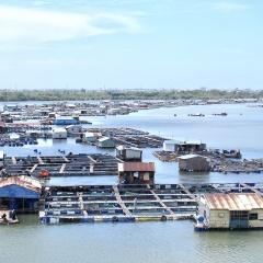 Bà Rịa – Vũng Tàu đẩy nhanh sắp xếp lồng bè nuôi trồng thủy sản