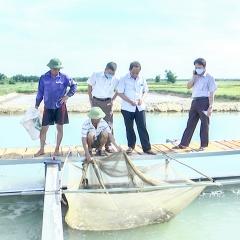 """Triển khai mô hình nuôi cá """"sông trong ao"""" đầu tiên ở Quảng Trị"""
