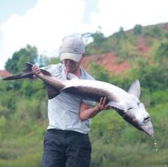 """Người đàn ông đánh liều nuôi đàn cá """"ngàn đô"""" trên Cao Nguyên"""