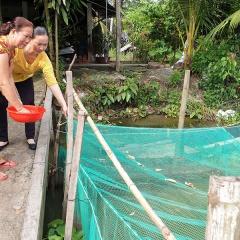 Nước vừa chớm nổi, dân Hậu Giang đã nhanh tay nuôi được 360 vèo cá