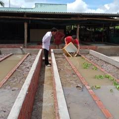 Bạc Liêu: Bất ngờ hiệu quả mô hình nuôi lươn thâm canh