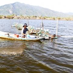 Khánh Hòa lưu ý thận trọng nuôi thủy sản lúc giao mùa
