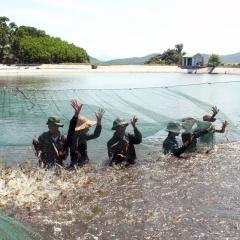 Xử lý môi trường nuôi tôm siêu thâm canh