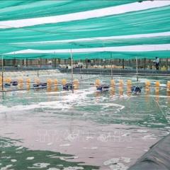 Bến Tre tập trung khai thác hiệu quả tiềm năng kinh tế thủy sản