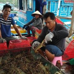 Tôm hùm giảm giá 50%, cá mú ế ẩm bị bỏ đói, nghìn tấn ngao ứ đọng