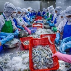 Ngành thủy sản thế nào sau nửa tháng thực thi EVFTA