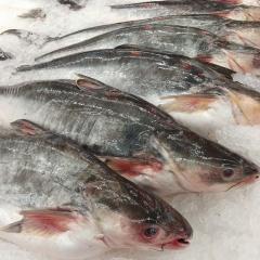 Xuất khẩu cá tra sang Trung Quốc giảm mạnh