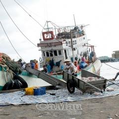 Đoàn kết, tương trợ nhau vì nghề biển bền vững