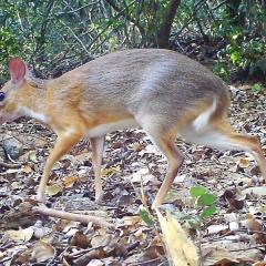 Các quần thể động vật hoang dã giảm hơn 75% trong 50 năm