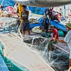 Thái Bình: Thành công phát triển toàn diện, bền vững kinh tế biển
