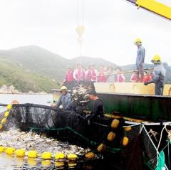 Khánh Hòa: Phát triển nuôi biển theo hướng công nghiệp