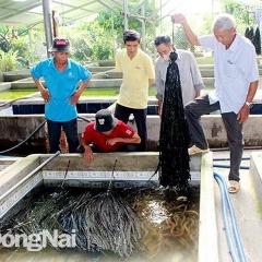 Nuôi đâu thắng đó, lão nông xây luôn 180 hồ nuôi lươn