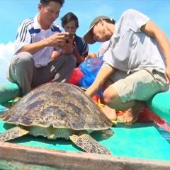 Kiên Giang: Thả cá thể rùa biển quý hiếm nặng gần 50kg về biển